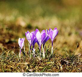 fleurs ressort, premier