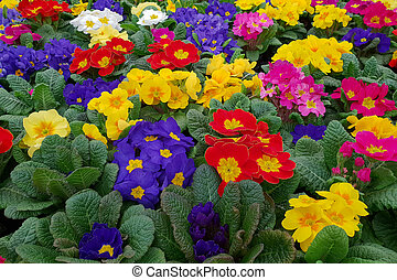 fleurs ressort, vente