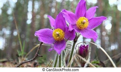 fleurs ressort