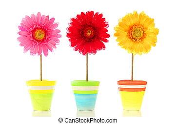 fleurs, rigolote