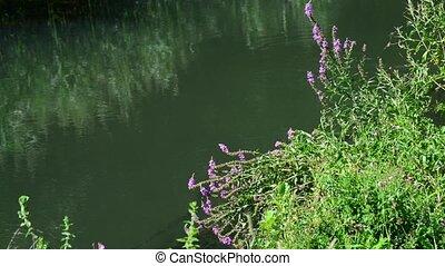 fleurs, rivière, russie, banque