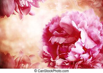 fleurs, rose, pivoine