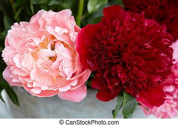 fleurs roses, deux, pivoine, rouges