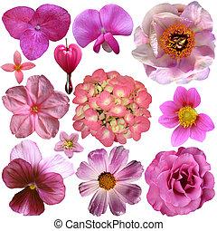 fleurs roses, différent, ensemble, isolé