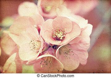 fleurs roses, sur, vendange, fond