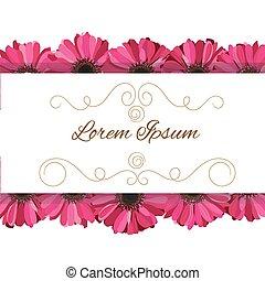 fleurs roses, vecteur, gerbera, invitation