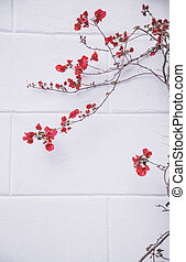 fleurs rouges, blanc, mur