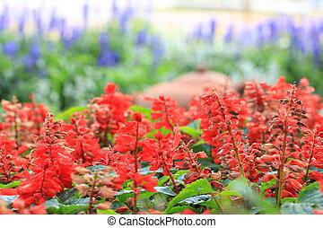 fleurs, rouges