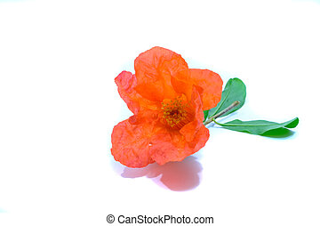 fleurs, rubis