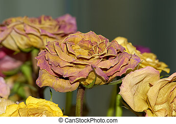 fleurs, séché