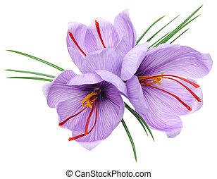fleurs, safran