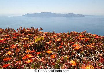 fleurs, santorini, rouges
