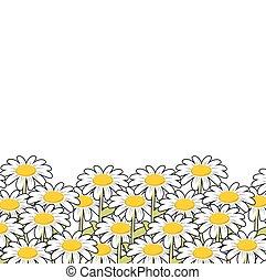 fleurs sauvages, été, meadow., paysage, chamomile., flowers., beau, blanc