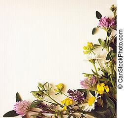 fleurs sauvages, coin