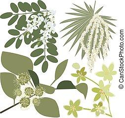fleurs sauvages, ensemble, dessin