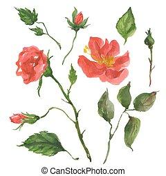 fleurs sauvages, rose