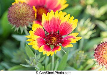 fleurs, soleil, jardin, jaune