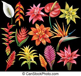 fleurs tropicales, ensemble