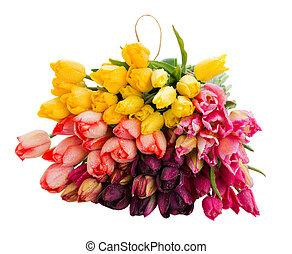 fleurs, tulipes, tas