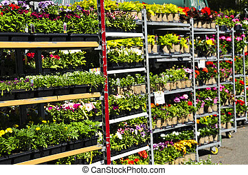 fleurs, vente
