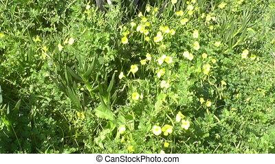 fleurs, vert, jaune, herbe