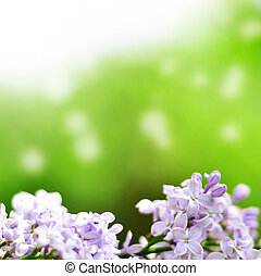 fleurs, vert, lilas, fond