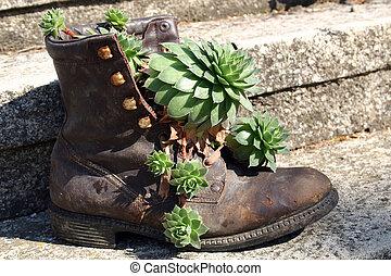 fleurs, vieux, chaussures