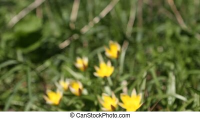 fleurs, -, zoom, jaune, foyer