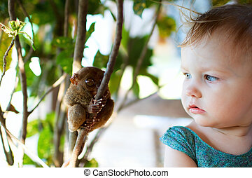 flicka, och, tarsier