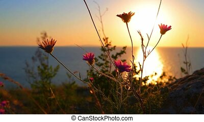 Flickering in the wind wild flowers against golded sunset...