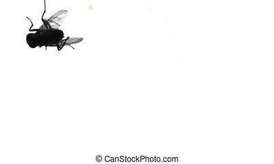 fliegen, silhouette