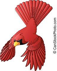 fliegendes, kardinal, vogel
