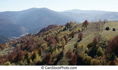fliegendes, oben, schöne , gefärbt, herbstbäume