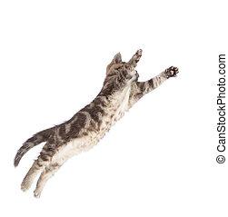 fliegendes, oder, springende , katz, kã¤tzchen, freigestellt, weiß