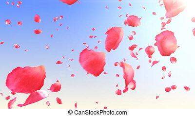 fliegendes, rosenblütenblätter, in, der, sky., hd.