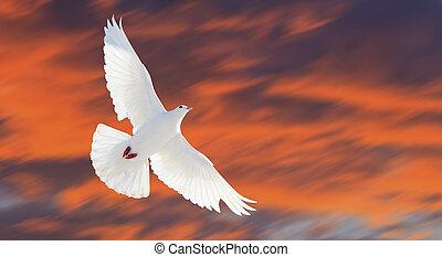 fliegt, hoffnung, himmelsgewölbe, vogel, stürmisch