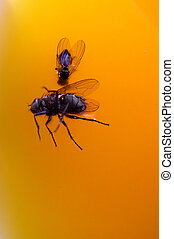 Flies drowned in orange juice