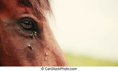 Flies on the horse's eyes.