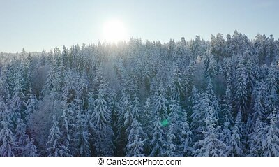 Flies slow against the sun above epic snowy forest in cold...