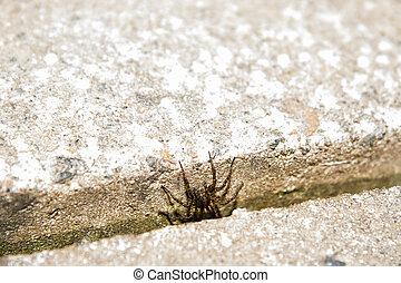 fliesenmuster, verstecken, spinne, zwischen