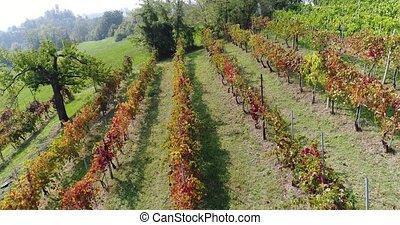 Flight along a small vineyard