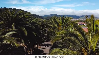 Flight along the palm grove. View from the height on...