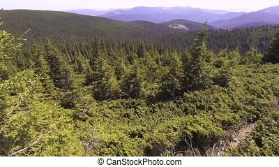 Flight in the mountains over the summer Carpathian forest....