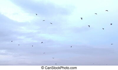 Flight of a flock of birds - A large flock of birds flying...