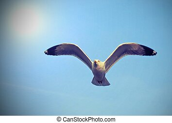 flight of a Seagull in the sky
