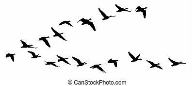 Flight of birds.