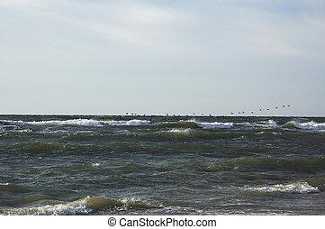 Flight of birds flying over the sea