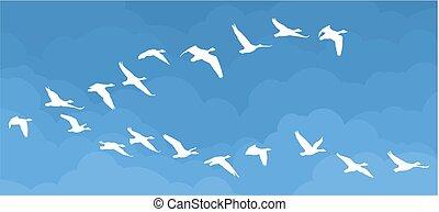 Flight of birds in the sky.