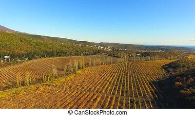 Flight of the drone over the vineyards