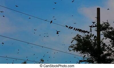 Flight of wild birds